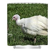 Turkey And The Chopping Block Shower Curtain