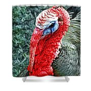 Turkey Brawn  Shower Curtain