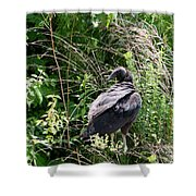 Black Vulture - Buzzard Shower Curtain