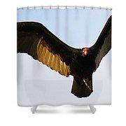 Turkey Vulture Evening Flight Shower Curtain