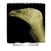 Turkey Vulture Head, X-ray Shower Curtain