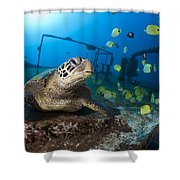 Turtle And Sealife Shower Curtain