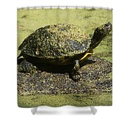Turtle Camouflage Shower Curtain