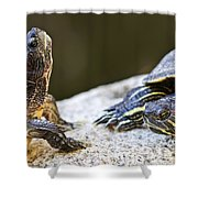 Turtle Conversation Shower Curtain by Elena Elisseeva