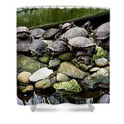 Turtle Island Shower Curtain