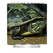 Turtle Neck Shower Curtain