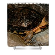 Turtle Time On The Rocks Shower Curtain