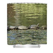 Turtle Traffic Jam Shower Curtain
