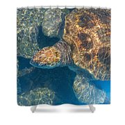 Turtle Underwater,high Angle View Shower Curtain