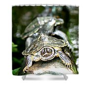 Turtles In A Row Shower Curtain