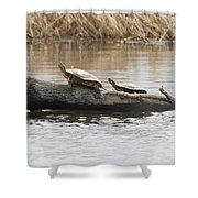 Turtles Pretending To Be Part Of The Log Shower Curtain