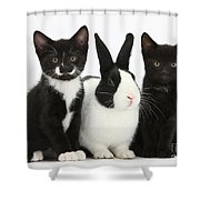 Tuxedo Kittens With Dutch Rabbit Shower Curtain
