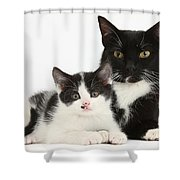 Tuxedo Mother Cat And Kitten Shower Curtain
