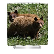 Twin Cubs Shower Curtain