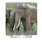 Twin Elephants Shower Curtain