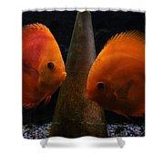 Twin Friends Malboro Fish  Shower Curtain