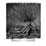 Twisted Beauty - Bw Shower Curtain by Christopher Holmes