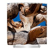 Twisted Bristlecone Pine Shower Curtain