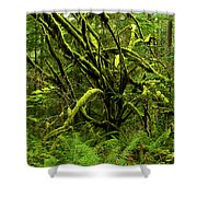 Twisted Rain Forest Shower Curtain