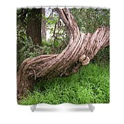 Twisted Tree 1123 Shower Curtain