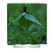 Twisted Trillium Shower Curtain