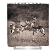 Two Antelopes Together In A Field Shower Curtain
