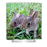 Two Baby Bunnies Shower Curtain