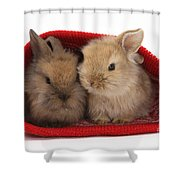 Two Baby Lionhead-cross Rabbits Shower Curtain