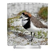 Two-banded Plover Charadrius Shower Curtain