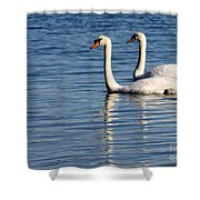 Two Beautiful Swans Shower Curtain by Sabrina L Ryan