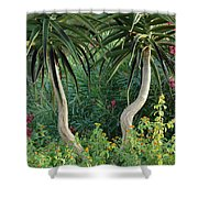 Two Bent Trees Shower Curtain
