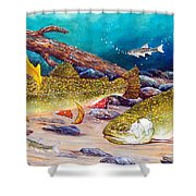 Two Brook Trout Shower Curtain