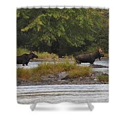 Two Bull Moose In Maine Shower Curtain
