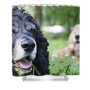 Two Cocker Spaniel Dogs Shower Curtain
