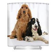 Two Cocker Spaniels Shower Curtain