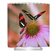 Two Colorful Butterflies On Cone Flower Shower Curtain