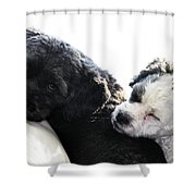 Two Cute Shower Curtain by Larry Ricker