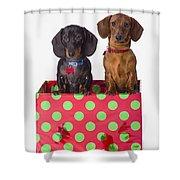 Two Dachshund Puppies Inside A Polka Shower Curtain