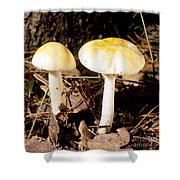 Two Death Cap Mushrooms Shower Curtain
