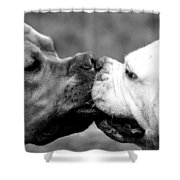 Two Dogs Kissing Shower Curtain
