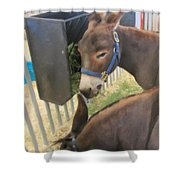Two Donkeys Eating Shower Curtain by Donna Munro