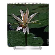 Two Frogs Sharing A Lotus Shower Curtain