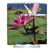 Two Graceful Water Lilies Shower Curtain