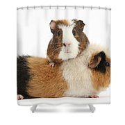 Two Guinea Pigs Shower Curtain