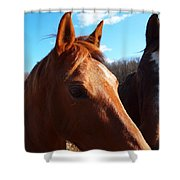 Two Horses In Love Shower Curtain