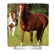 Two Horses In Summer Shower Curtain