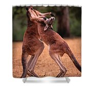 Two Kangaroos Appear To Be Dancing Shower Curtain