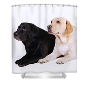 Two Labs Shower Curtain