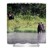 Two Moose Shower Curtain
