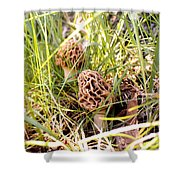 Two Morels Shower Curtain